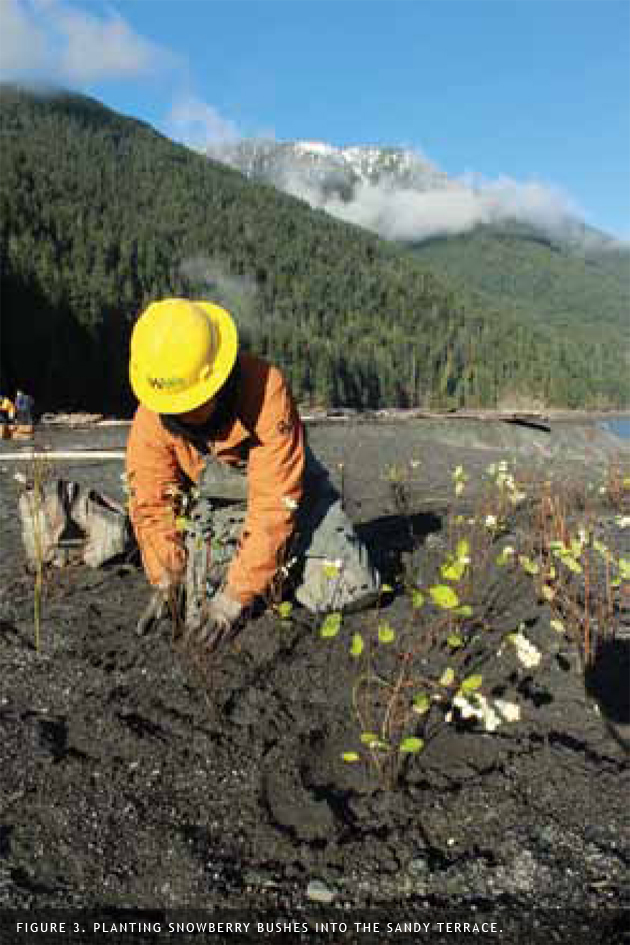 planting snowberry in lake mills lakebed