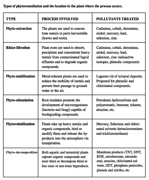 Types of Phytoremediation